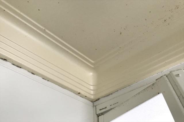カビ対策を行って床や壁、天井のカビに悩まない!